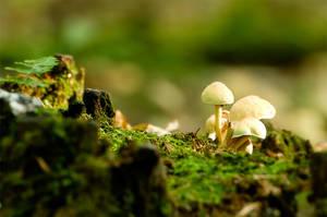 Mushroom by Shanec86