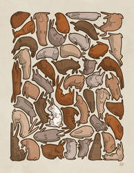 Forty-Seven Brown Bunnies by boum