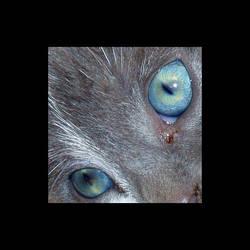 Eyes of the beast by neander