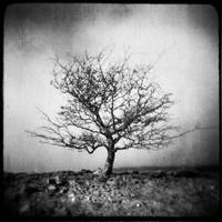 Brecon Tree by Mohain