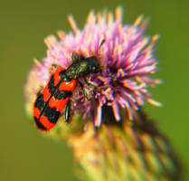Pollinator by AthosLuca