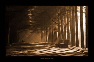 Misty Morning by Frider
