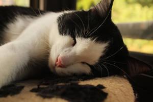 Lazy cat by Vidamasu
