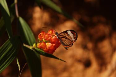 Mystic beauty! by Vidamasu