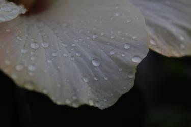 Delicate like a wondrous petal by Vidamasu