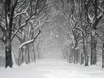 Central Park Snowstorm by Jeff-Stein-Design