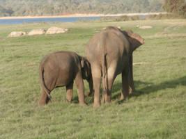 Elephant Stock #10 by DeepSeaBreakfast