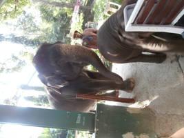Domestic Elephant Stock #1 by DeepSeaBreakfast