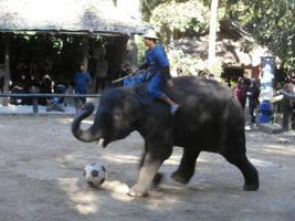 Domestic Elephant Stock #7 by DeepSeaBreakfast