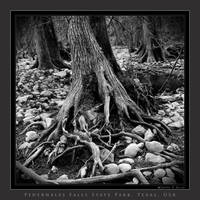 Forest of Roots and Stones by houselightgallery