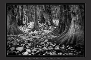 Forest and Stones by houselightgallery