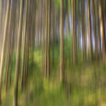 Enchanted Woods by houselightgallery