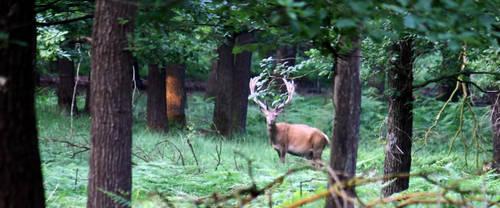 Red deer by Sabbie89