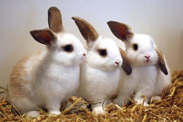 Rabbit kits by Sabbie89