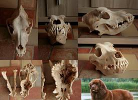 My dog collection: Newfoundlander by Myskullcabinet