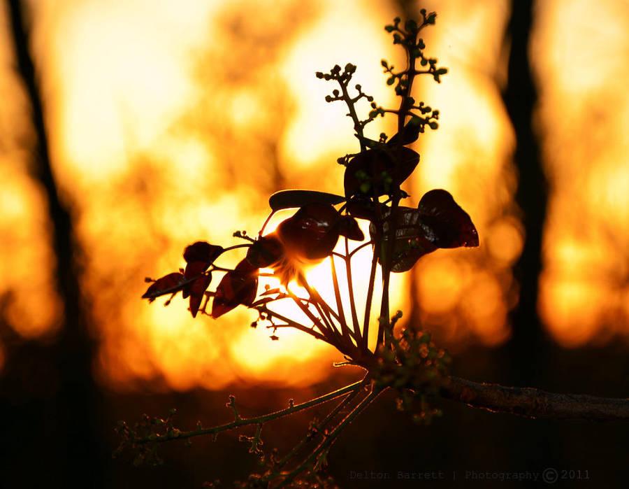 Golden Sun Gaze by Delton36712