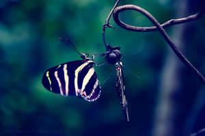 Butterfly Love by Delton36712