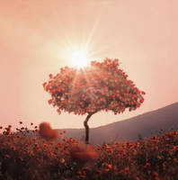 Red Tree spring mood by veziphoto