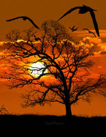 Yellow tree silhouette by veziphoto
