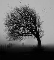 Lonely tree love bnw by veziphoto