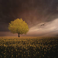 Yellow Tree spring mood with bird by veziphoto