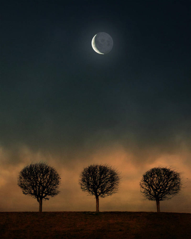 Three Trees on Moonlight by veziphoto