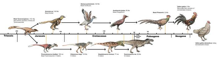 Chicken evolution by Qbliviens