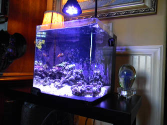 8 gallon nano reef by Cypress-626