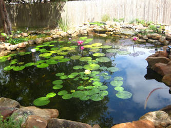 Pond 3 by Caine-Stock