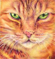 Ginger Cat - ballpoint pen by margaritafelis