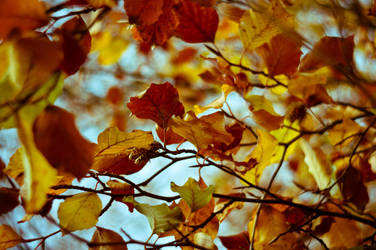 Late Autumn by woodfaery