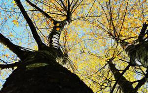 D'automne by Pixturesque
