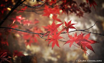 Maple by Pixturesque
