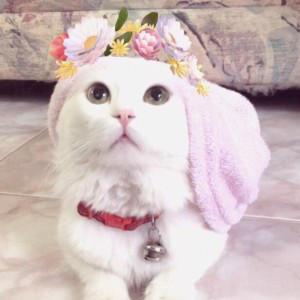 CelestialUsagi's Profile Picture