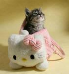 Kitty, kitty.. by hoschie