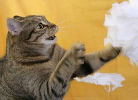 Mira in action by hoschie