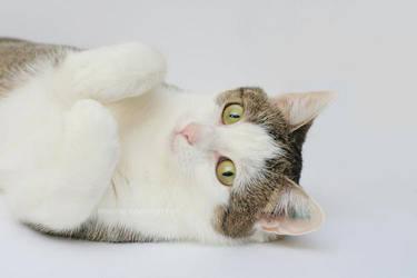 Cute posing by hoschie