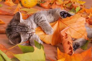 A taste of autumn by hoschie