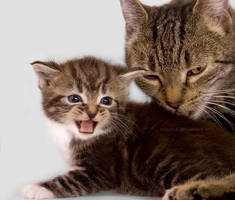Not right now mommy... by hoschie