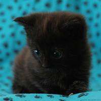 little Kruemel by hoschie