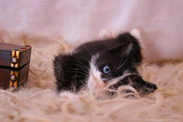 Dirty little kitten pirate 2 by hoschie