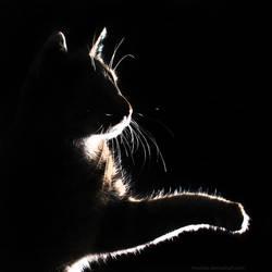 mimmi silhouette by hoschie