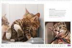 Hoschie in Whiskas calendar 2014 by hoschie