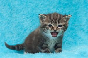 Kitty in fluffyland IV by hoschie