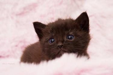 Kitty in fluffyland V by hoschie