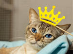 Today a king by hoschie