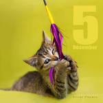 Dec 5 by hoschie
