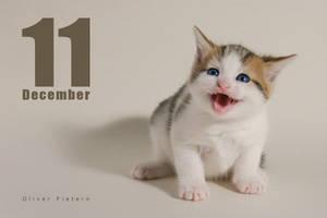 Dec 11 by hoschie