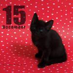 Dec 15 by hoschie