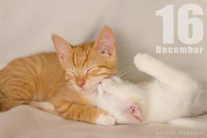 Dec 16 by hoschie